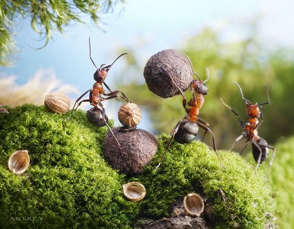 Фотографируем муравьёв с Андреем Павловым